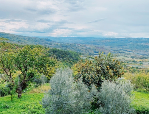 Hunting for Truffles and Wine in Croatia