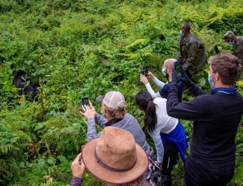 Ryan's Recap of 2020 Holiday in Rwanda + Tanzania